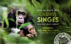 """Compte rendu sur l'exposition : """"Sur la piste des grands singes"""" du Muséum National d'Histoire Naturelle"""