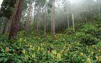 La bonne gouvernance et la forêt, Paulin Kialo